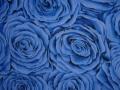 Twilight Garden Roses - onsite